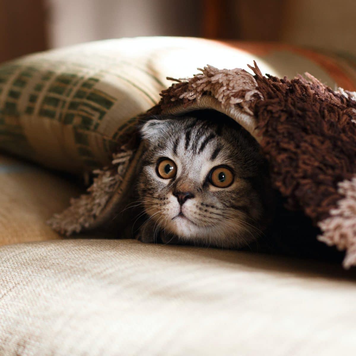 Hur länge ska en katt vara inne efter flytt?